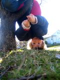 Upside down logan